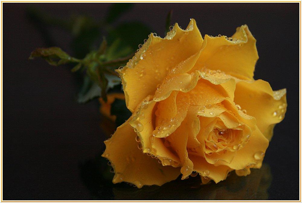 Königin_der_Blumen