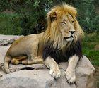 königliche Haltung