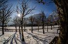Königssee - St. Bartholomä - Bäume