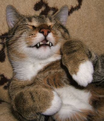 Können Katzen lachen...?