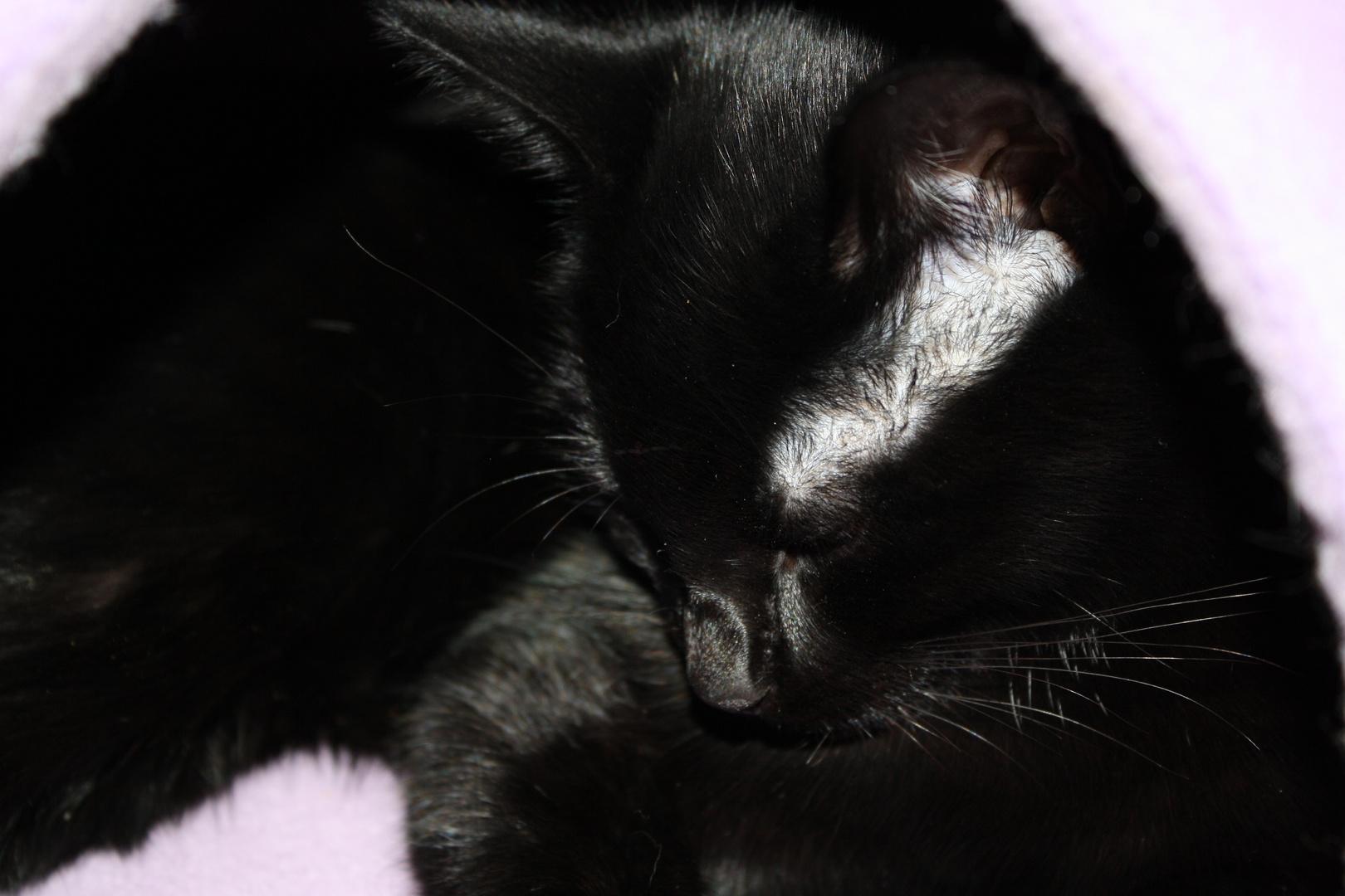 Können Katzen traurig sein?