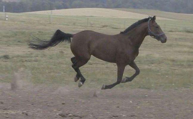 Können Pferde fliegen???