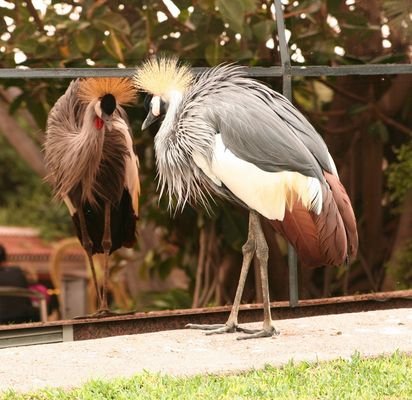 Können Vögel eitel sein?