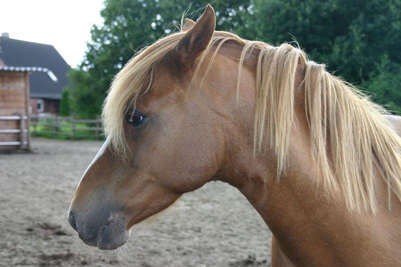 """Könnt ihr mir nicht mal meinen """"Pony"""" schneiden?"""