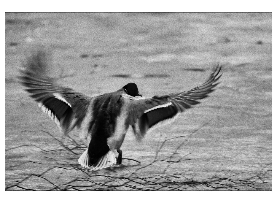 k(o)ernige Landung...