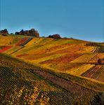 Köstlicher Wein wird in diesem Gebiet  erschaffen