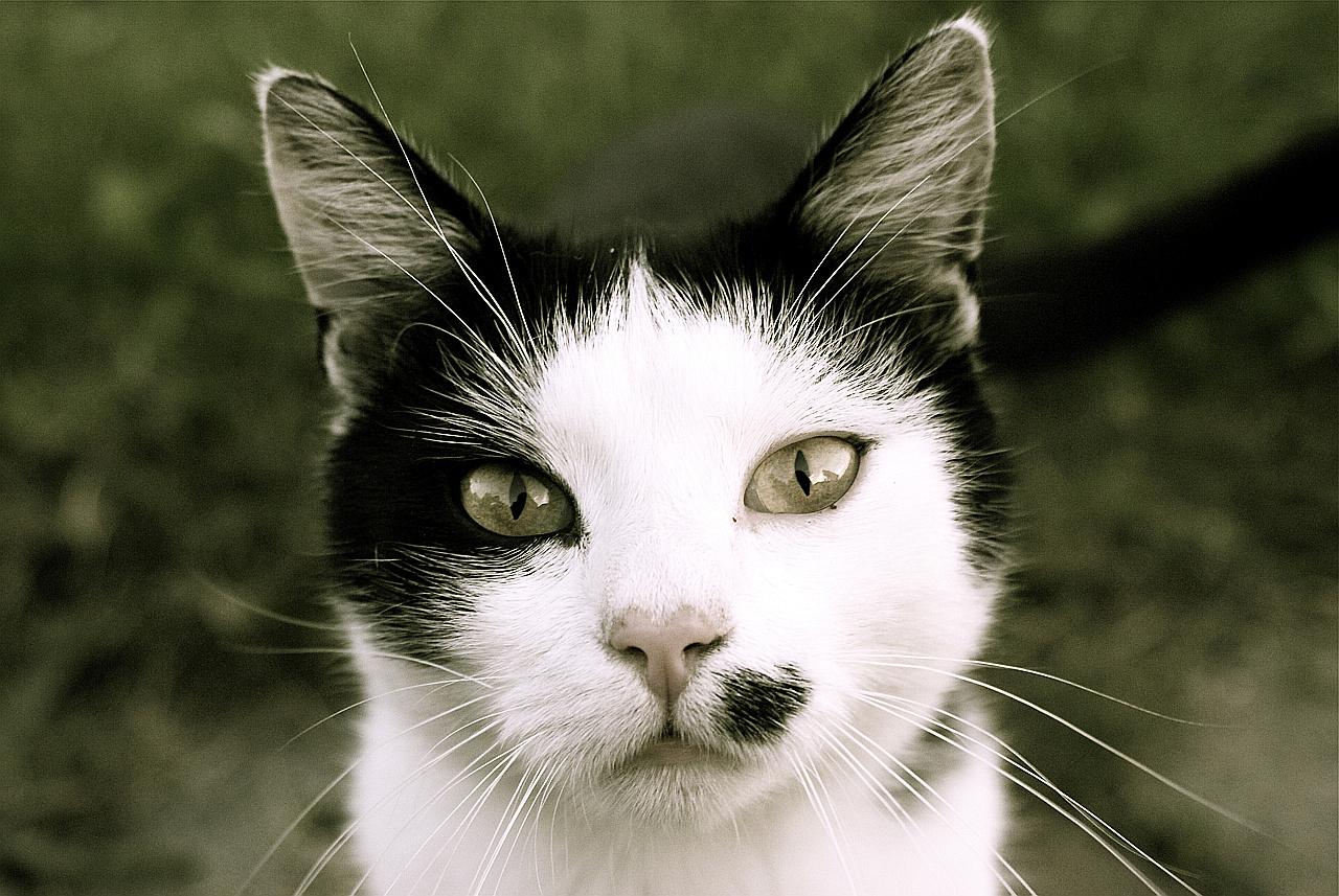 Köturinn oder die fotogene Katze
