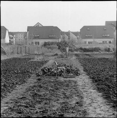 Kohlfeld
