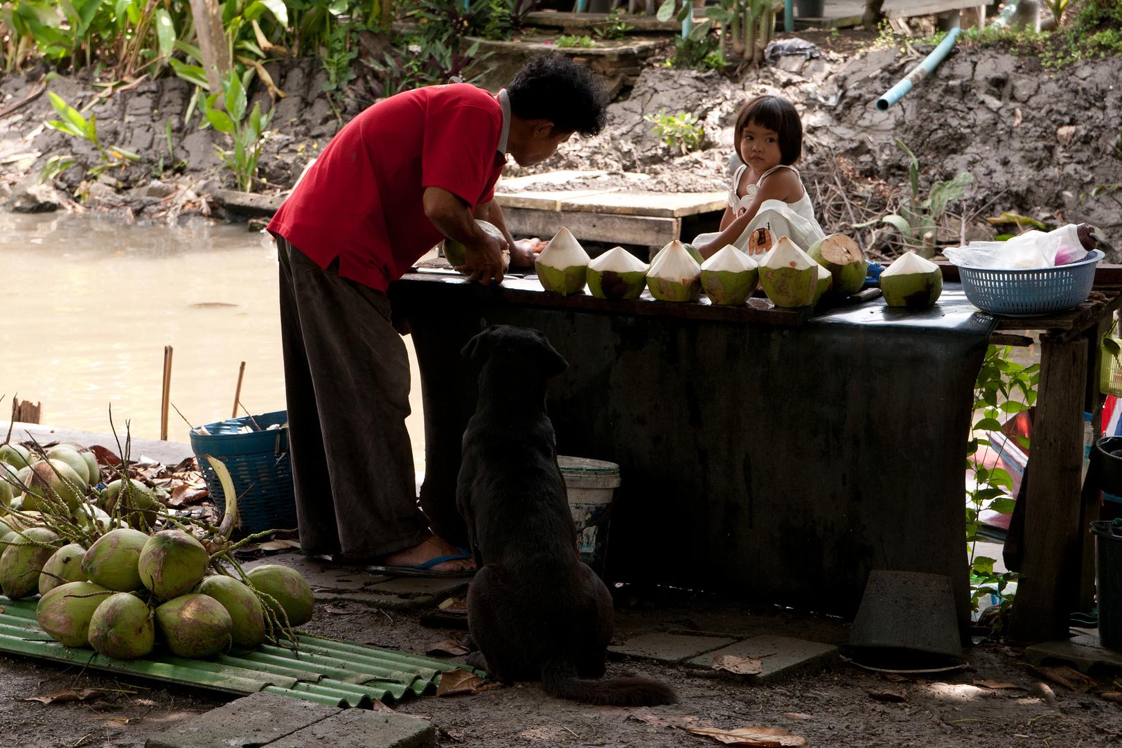 Kokosnüsse werden vorbereitet