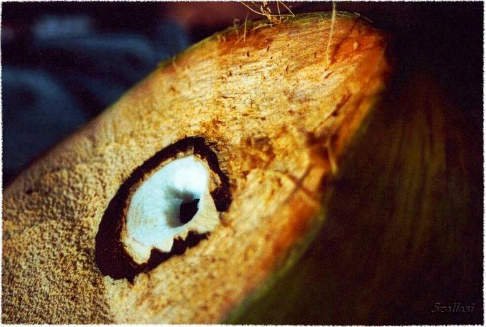 Kokosnuß