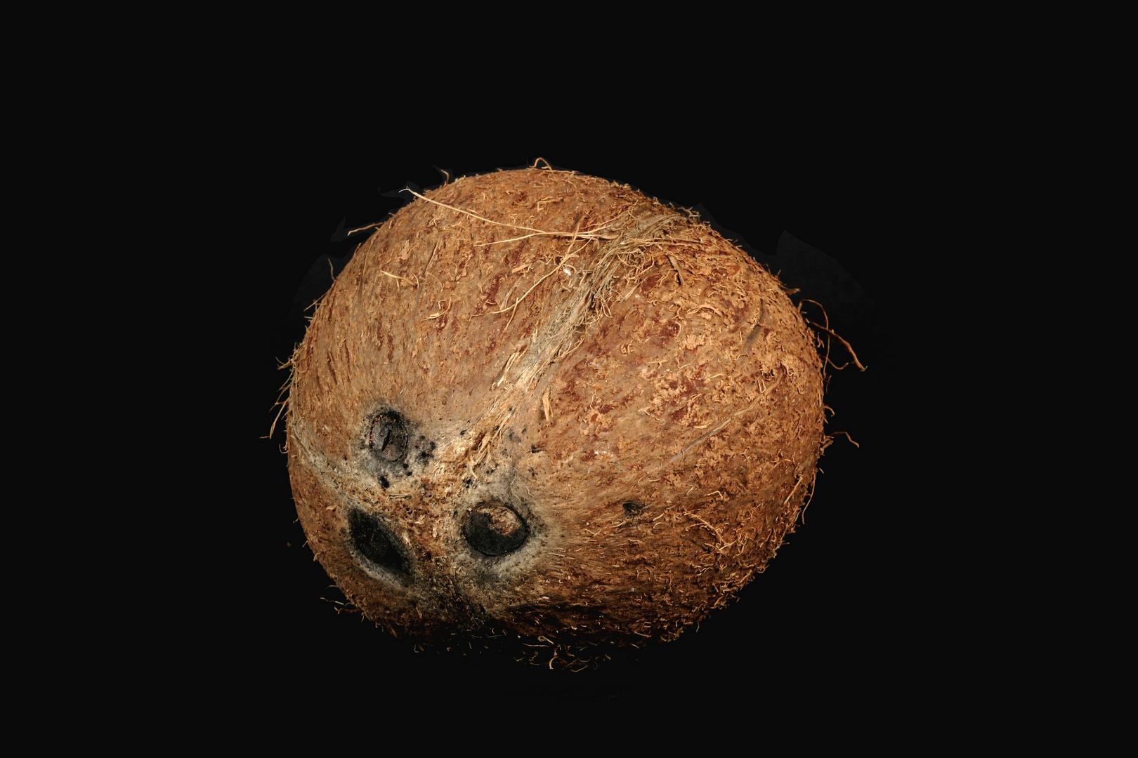 Kokosnuß b