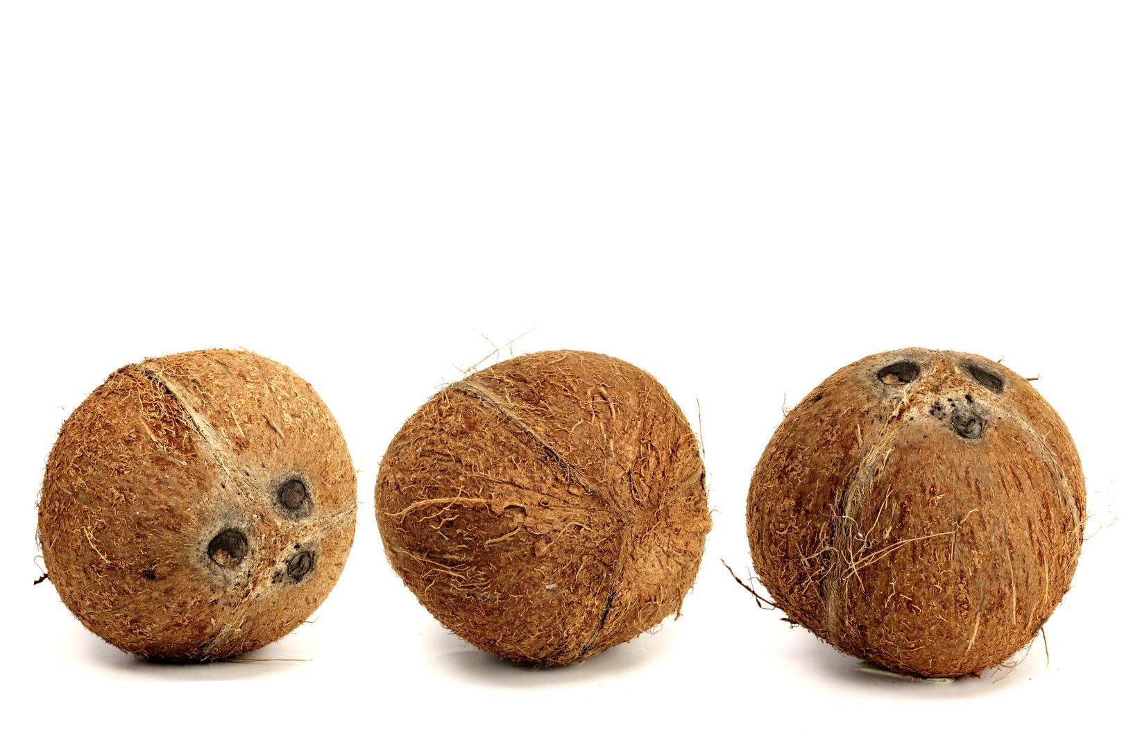 Kokosnuß c