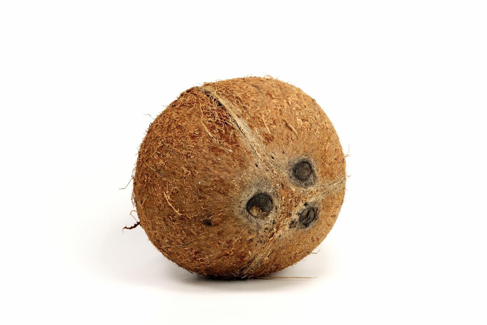 Kokosnuß d