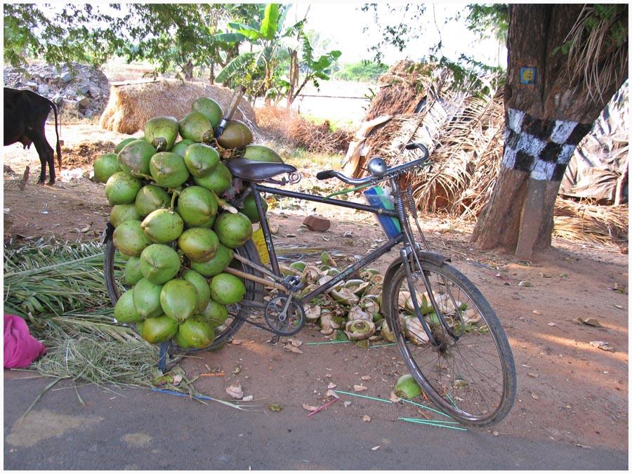 Kokosnuss-Transporter