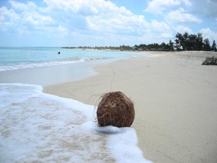 Kokusnuss am Strand