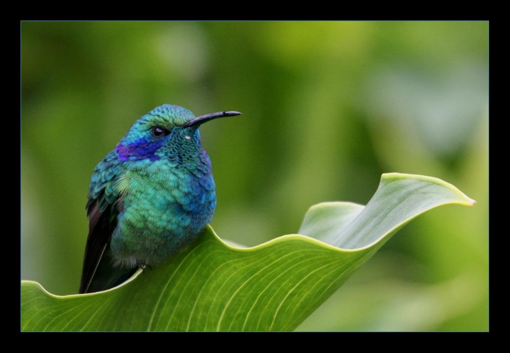 Kolibri ... die 1.