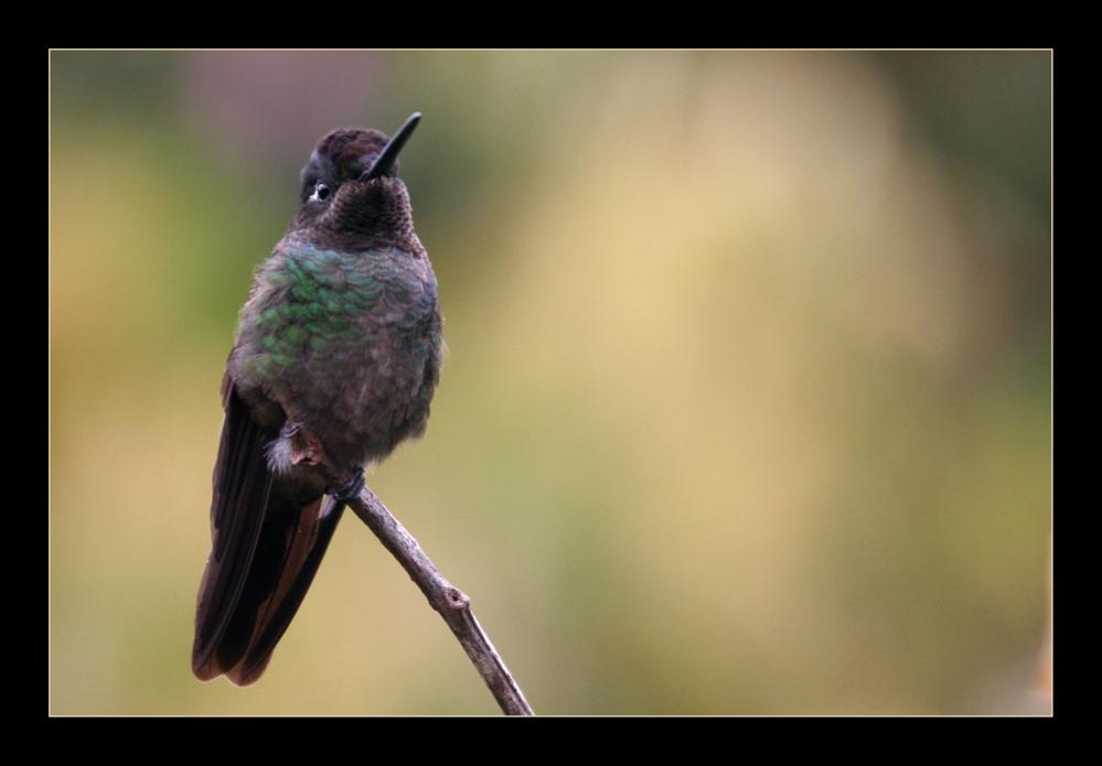 Kolibri ... die 2.