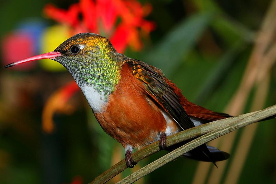 Kolibri, einmal ganz still