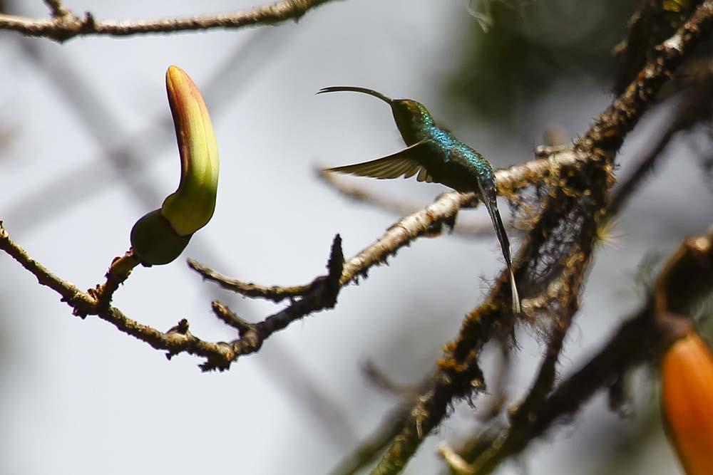 Kolibri Mahlzeit