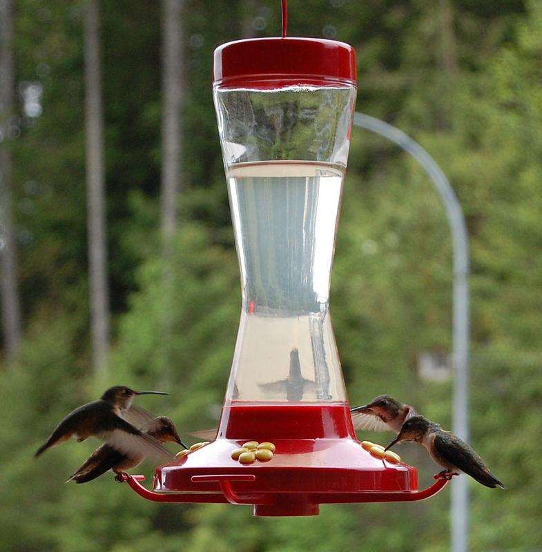 Kolibri Meeting
