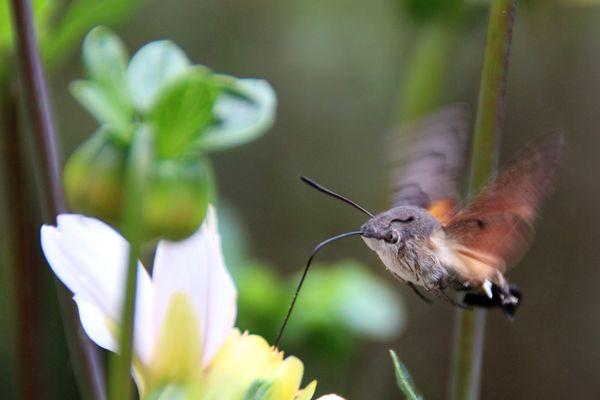 Kolibri-Motte :)