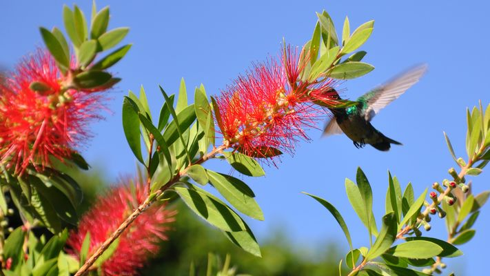 Kolibri10