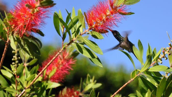 Kolibri11