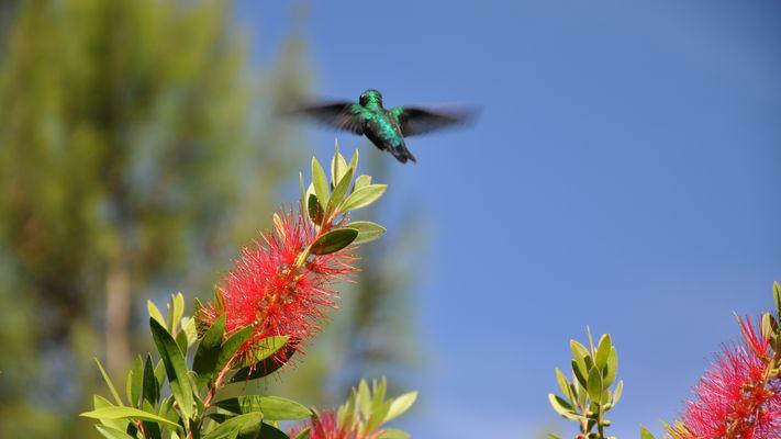 Kolibri13