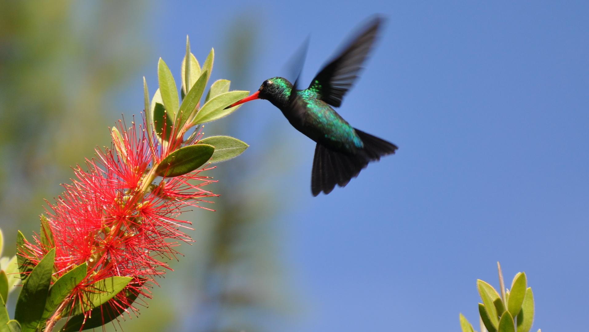 Kolibri1314