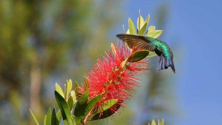 Kolibri14