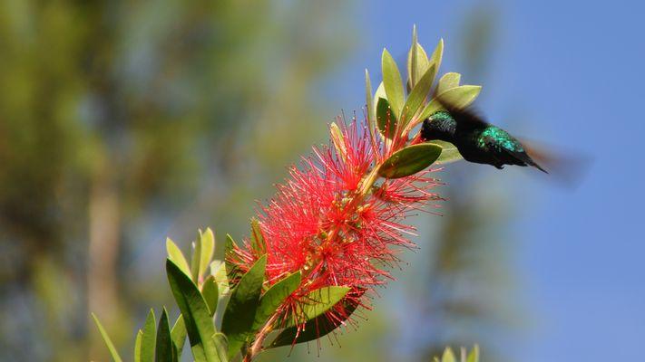 Kolibri15