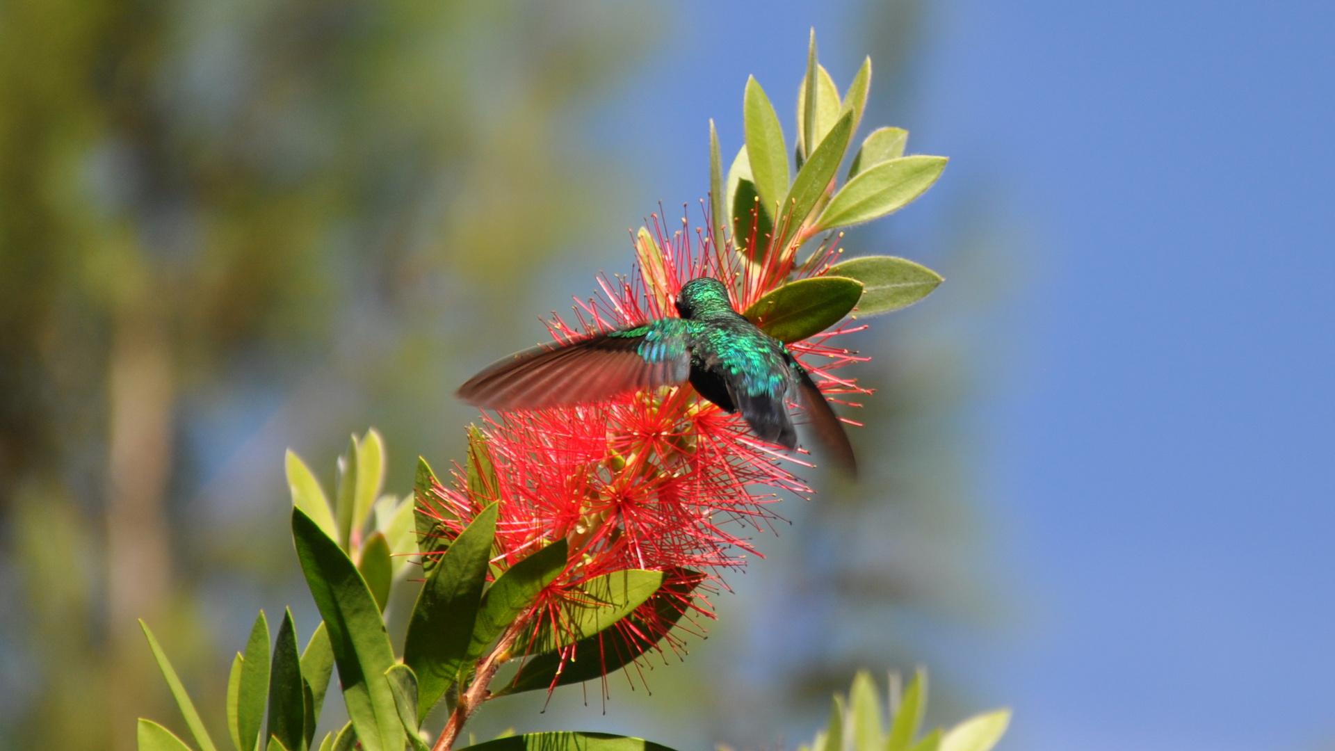 Kolibri17