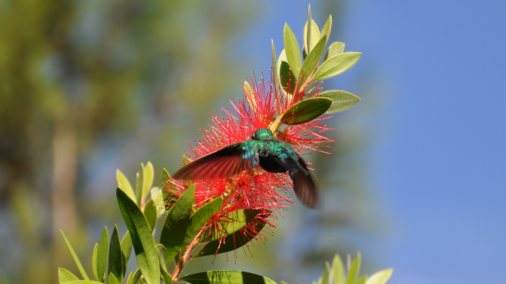 Kolibri21