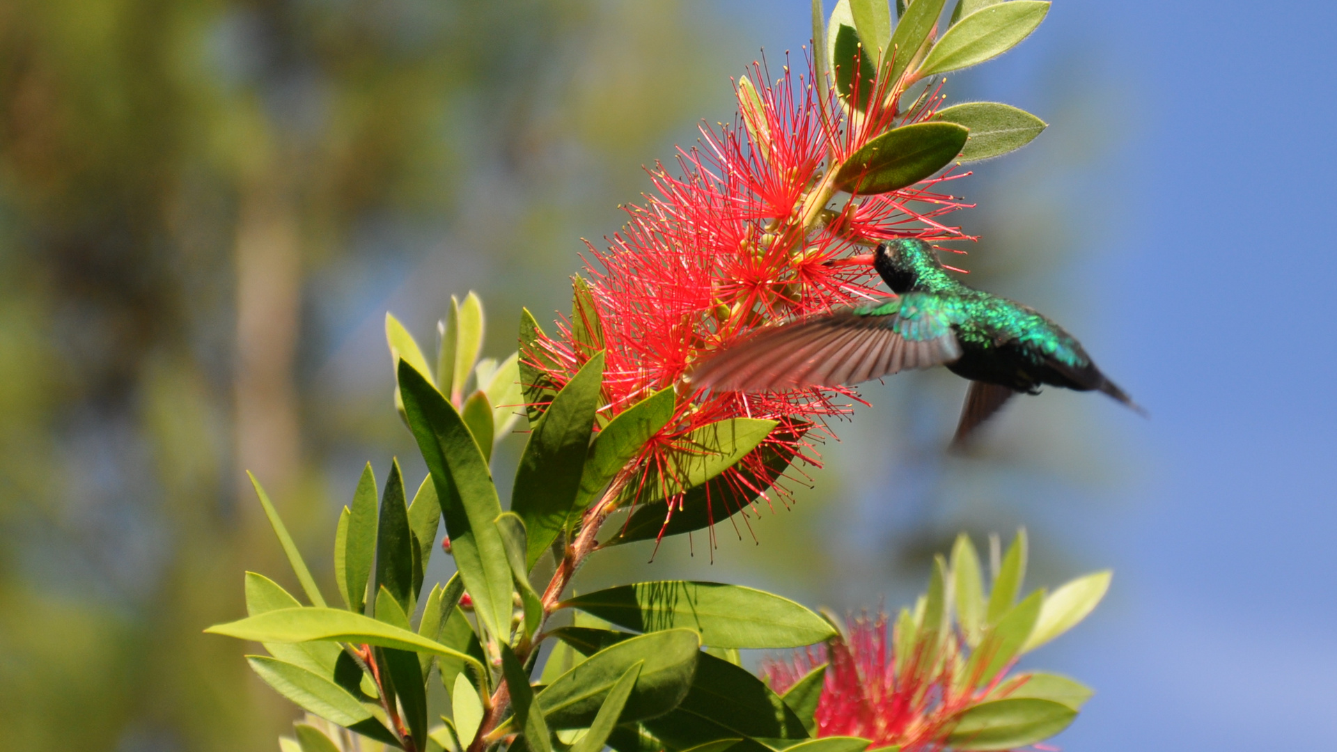 Kolibri22