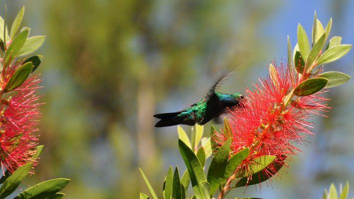 Kolibri26