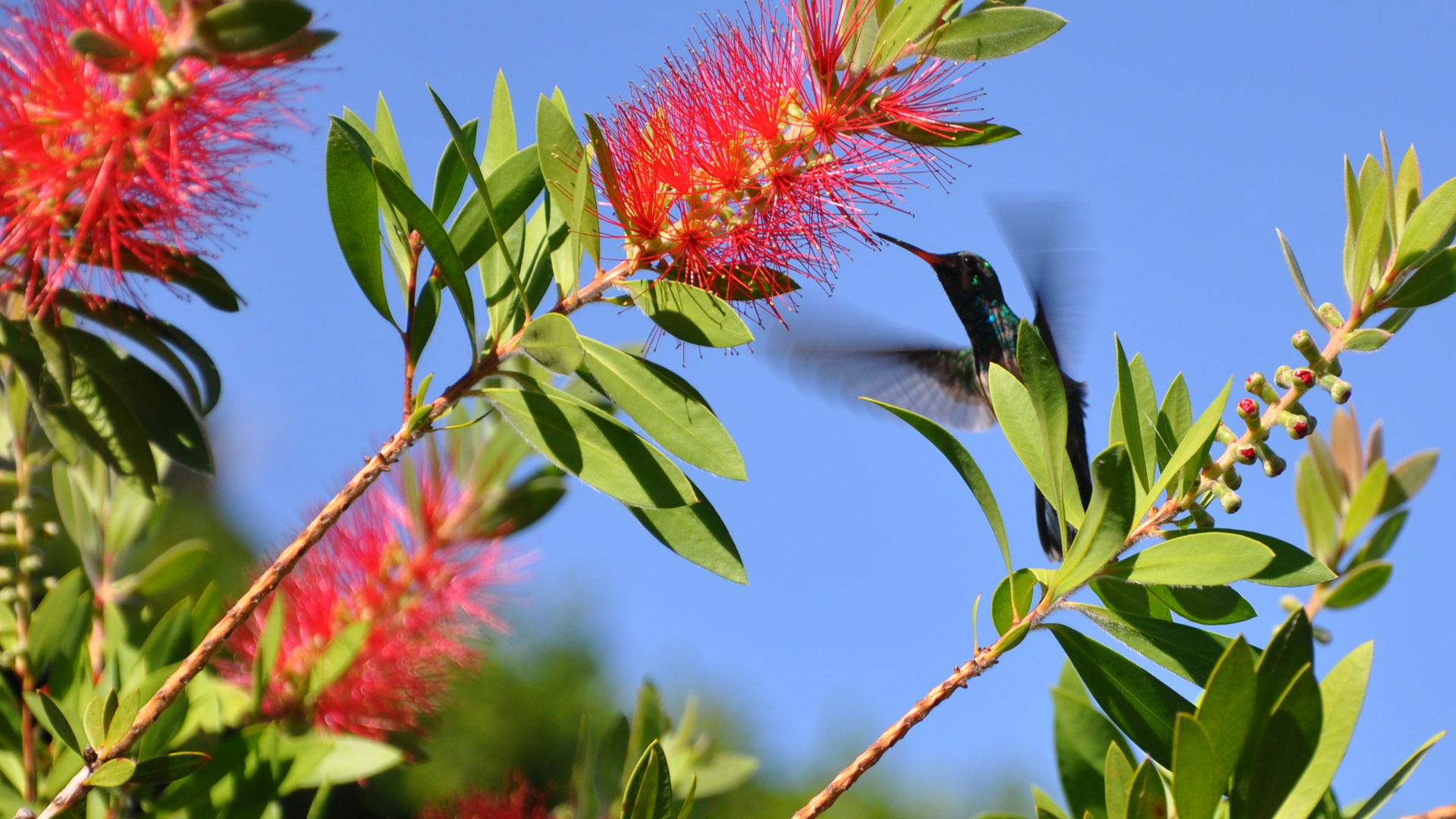 Kolibri4