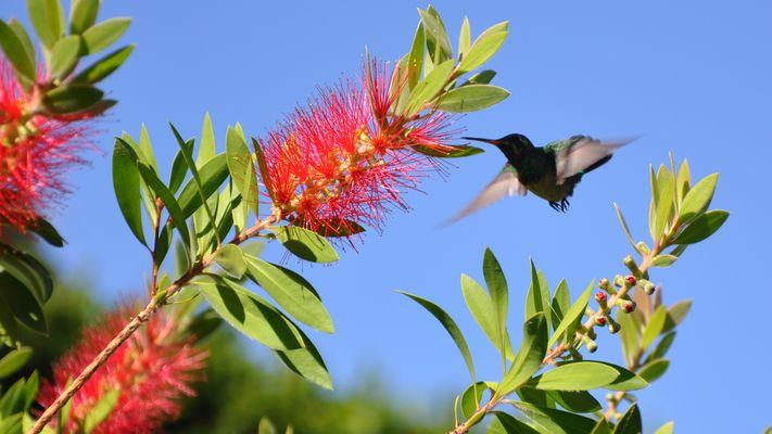 Kolibri5