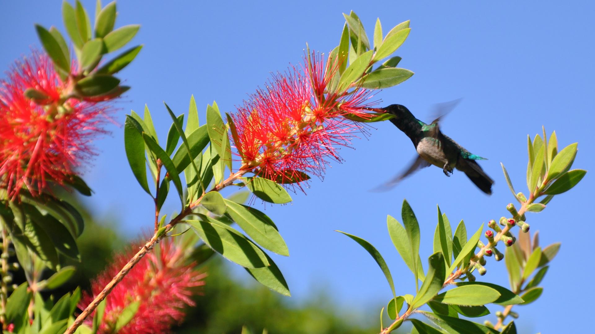 Kolibri6