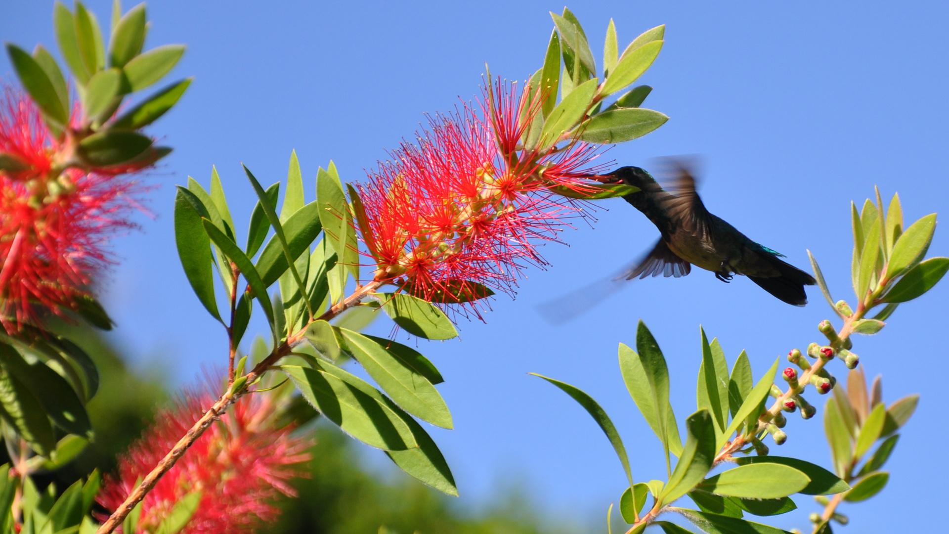 Kolibri7