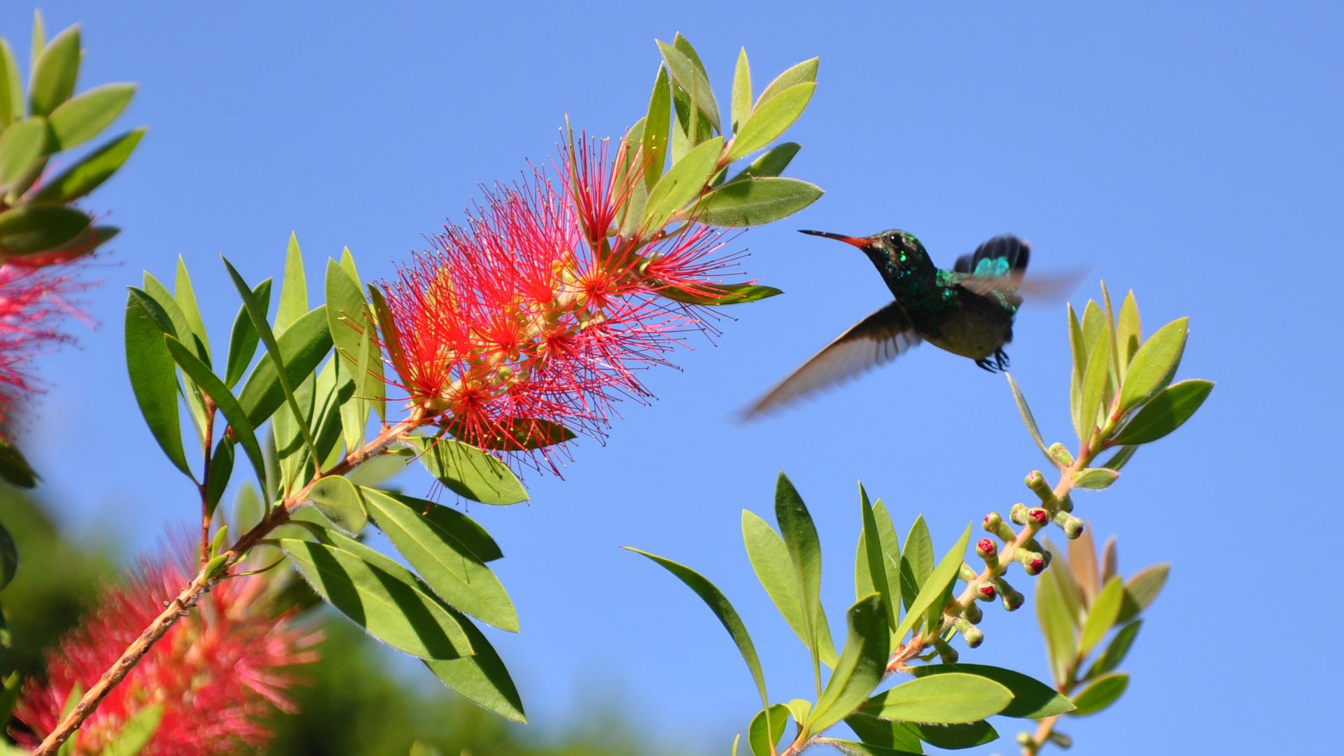Kolibri9