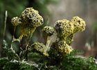 Komische Pilze...