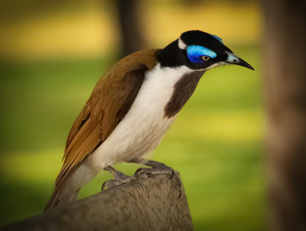 Komischer Vogel II