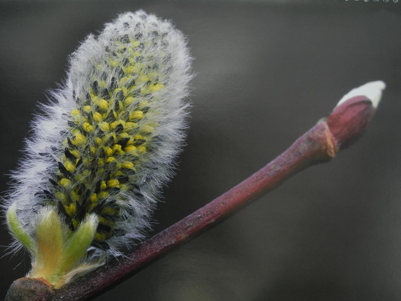 Komm doch lieber Frühling...