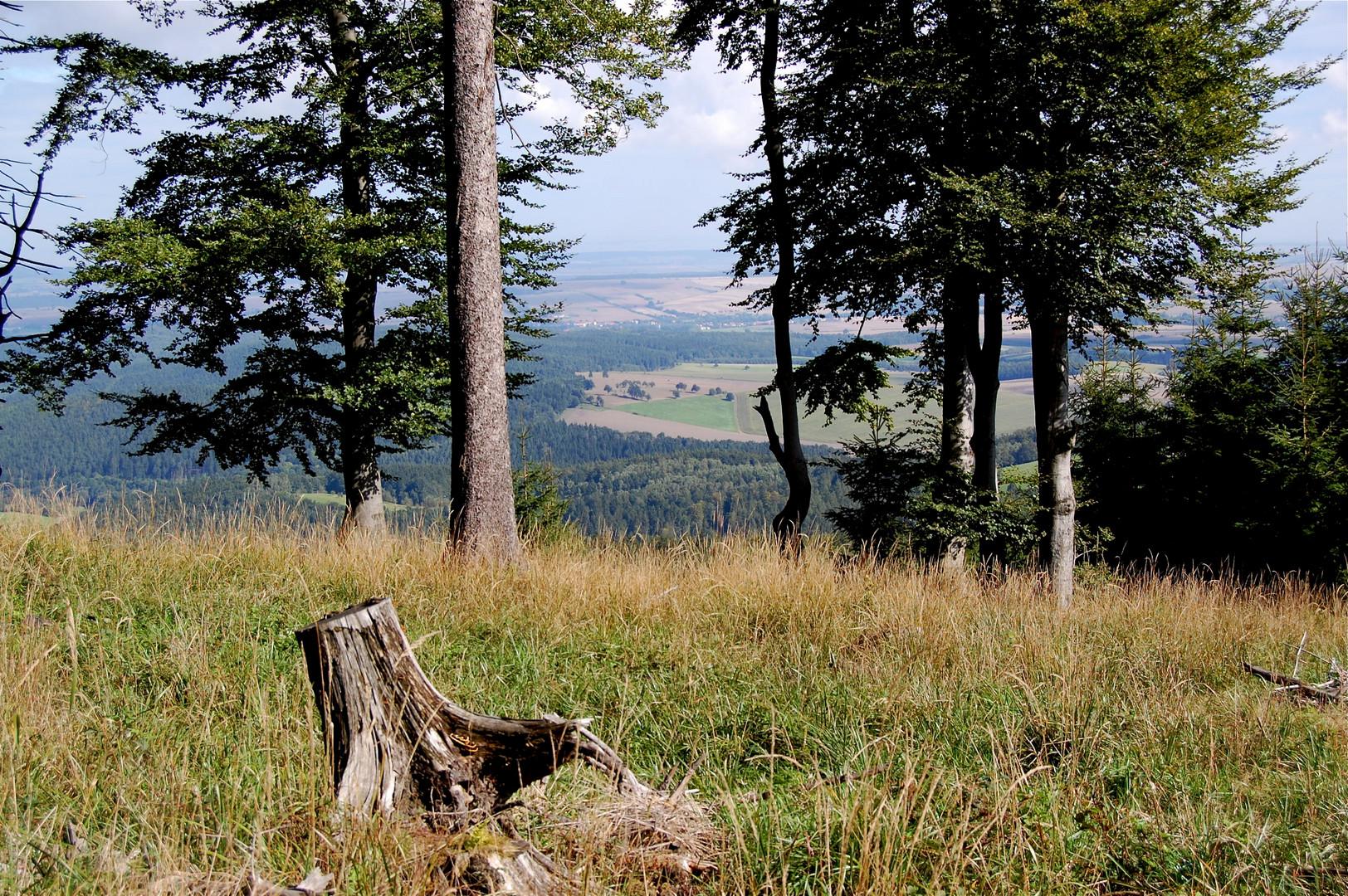 Komm doch mit in den Thüringer Wald, in den herrlichen Thüringer Wald…