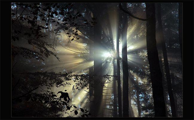 komm ins Licht..................*