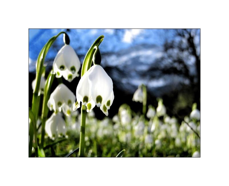 Komm, lass uns den Frühling einläuten...