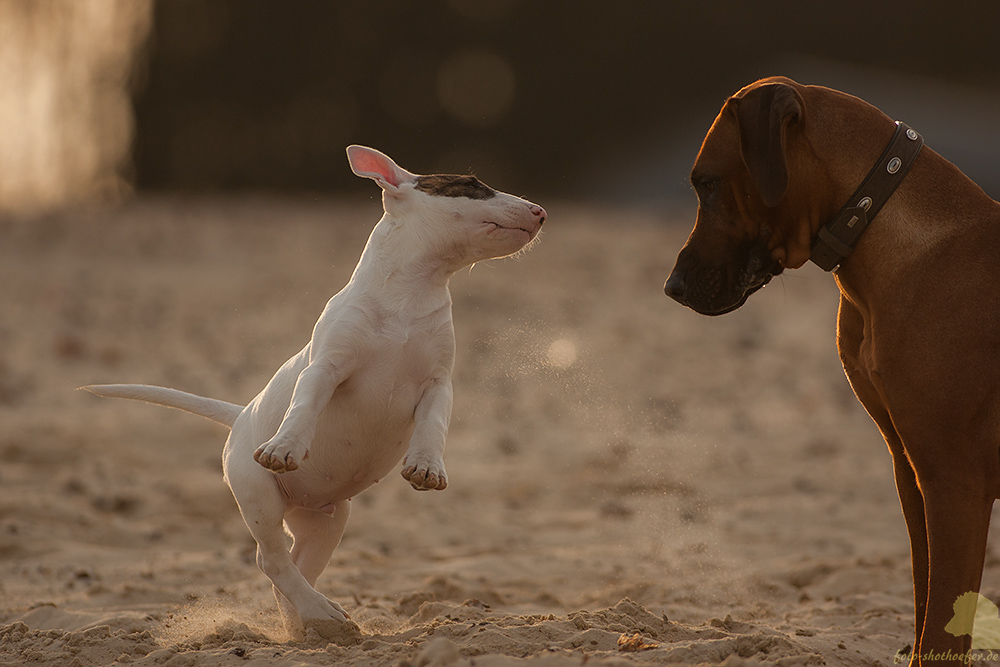 Komm, tanz mit mir!