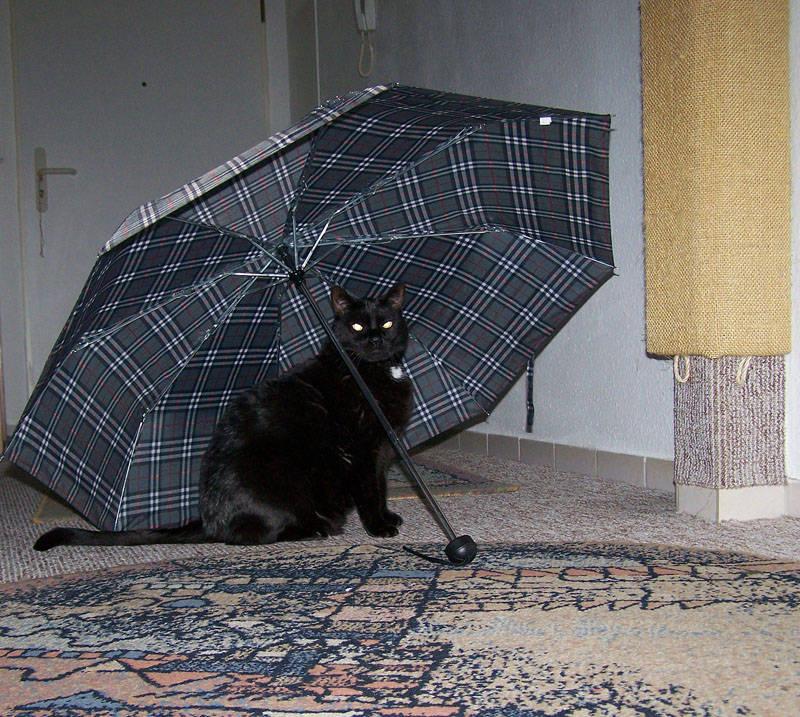 Komm wir gehen, Schirm hab ich schon