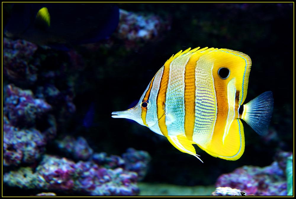 Kommt ein fisch macht blub foto bild tiere zoo for Fisch bilder