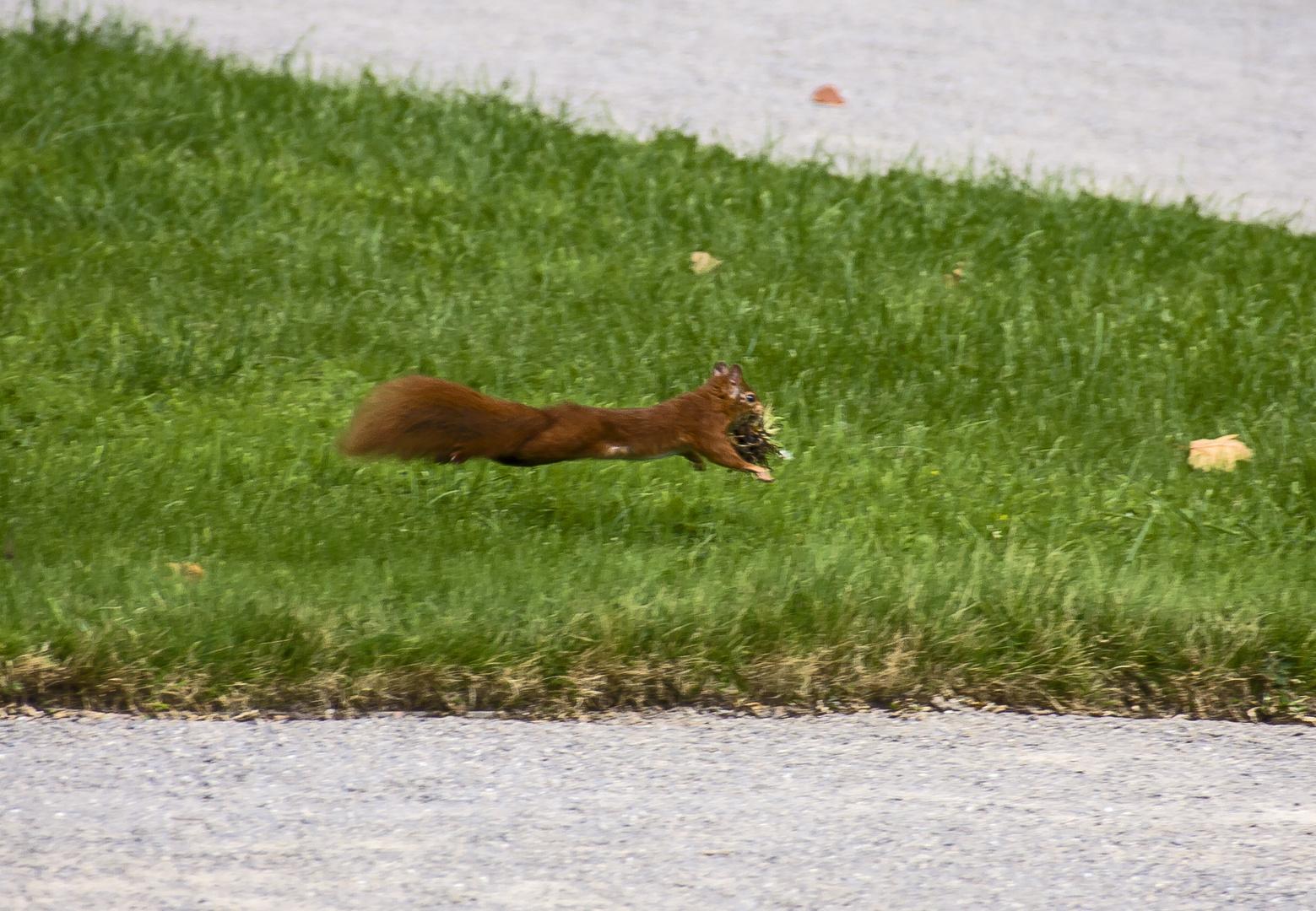 kommt ein Hörnchen geflogen...